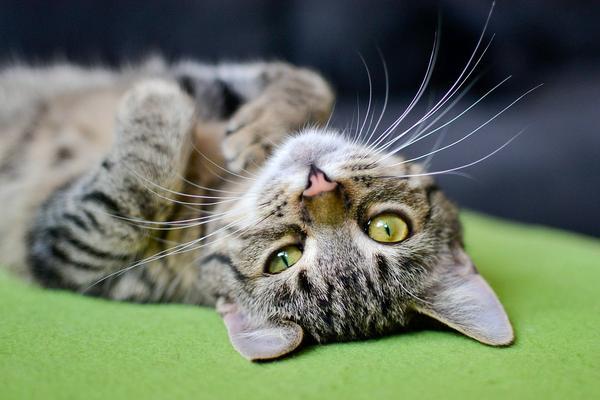 Karma essential foods dla kota