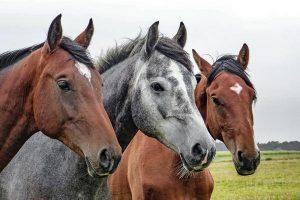 Zalety ziołowych dodatków paszowych dla koni