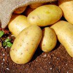 Jakich nawozów potrzebuje ziemniak?